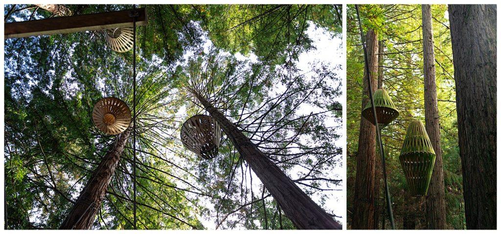 Redwood Day time walk
