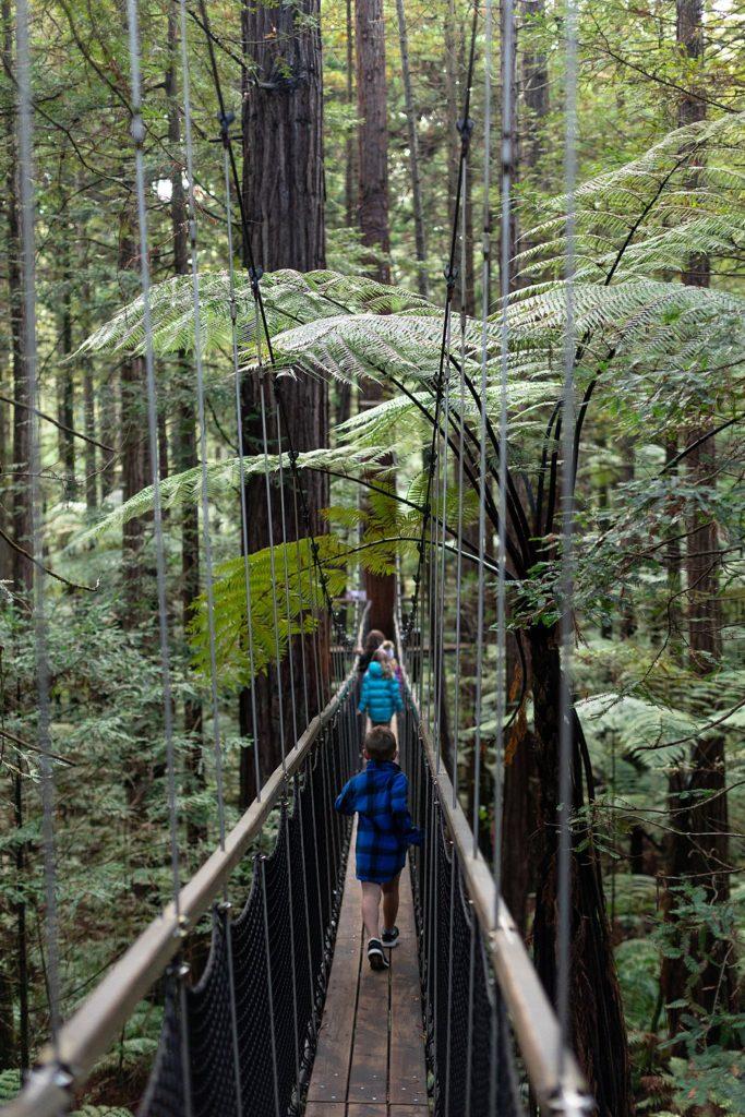 Redwoods Tree Walk Day