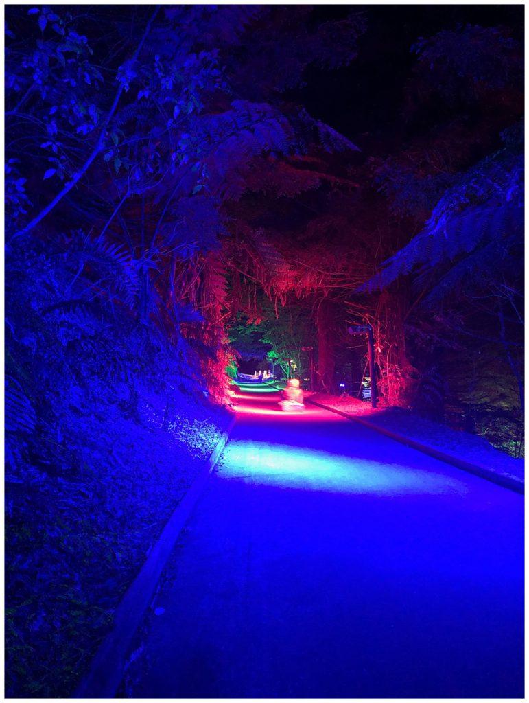 Night time luge Rotorua