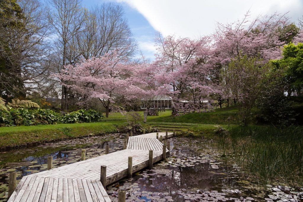 Waterlily Gardens